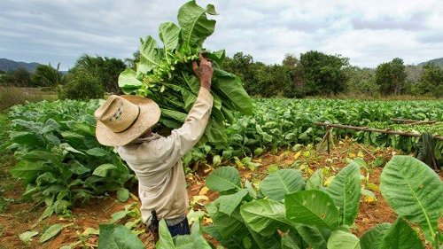 A Flu Vaccine Grown in Tobacco Plants Just Aced Its Clinical Trials