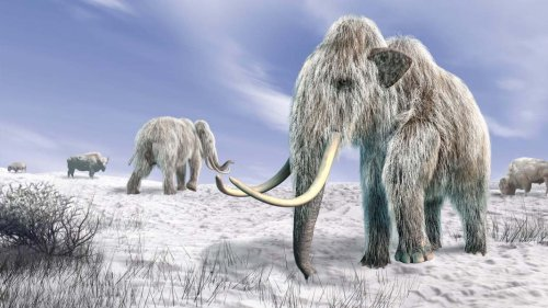 Can the woolly mammoth save Siberia from climate change?