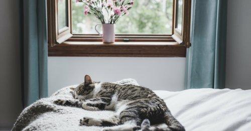 Darum sollten Sie nie mit offenem Fenster schlafen   freundin.de