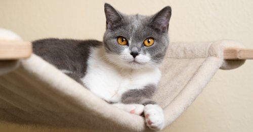 Katzenhängematte: Die besten Modelle und wichtige Infos