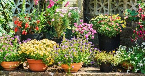 So können Sie Ihren Garten insektenfreundlich gestalten | freundin.de