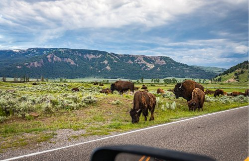 10 Eye-Popping Road Trips with Scenic Drives at U.S. National Parks | Frommer's