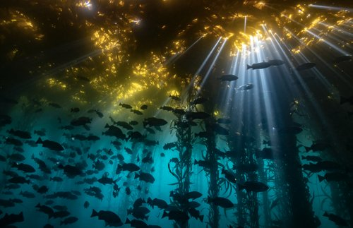 2020's Best Underwater Photos: Dive into the Wondrous World Below   Frommer's