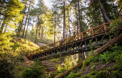 A Favorite Hike Through California Redwoods Is Back After More Than a Decade | Frommer's