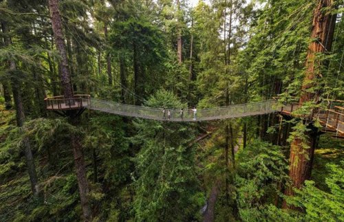 Take an Elevated Stroll Among Giant Redwoods on California's New Sky Walk | Frommer's