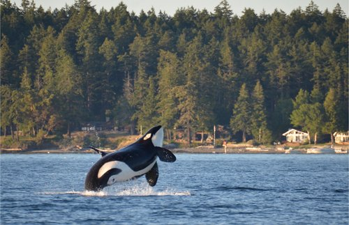 Two Terrific New Visitor Centers Coming to the San Juan Islands in Washington | Frommer's