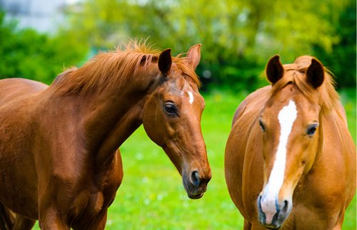 Visit Kentucky Horse Farms with New Virtual Tours | Frommer's