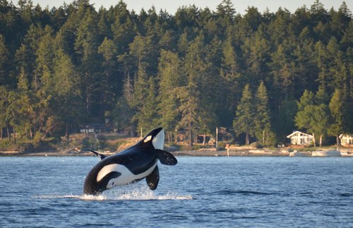 When and Where to Go Whale Watching in the USA: Four Seasons of Cetaceans | Frommer's