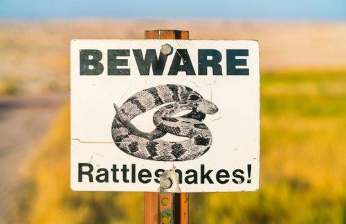 Tips for Avoiding a Snakebite While Hiking | Frommer's