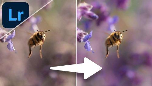 Use Lightroom to Breathe New Life Into Wildlife Photos