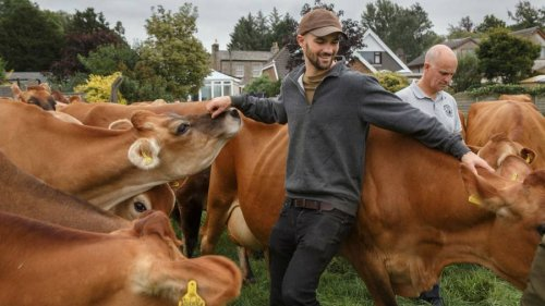Seaweed, Artificial Lightning and More Experiments to Curb Cows' Climate Impact
