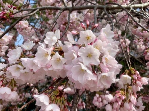 April Events in Northern Virginia - Festivals and Fun Near DC