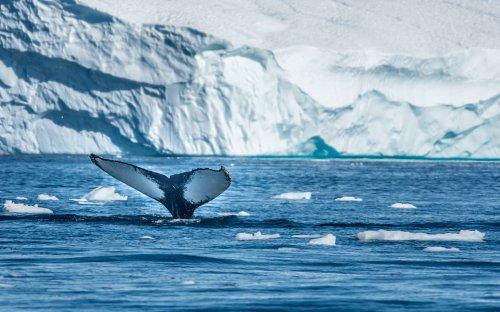Le Groenland fond à vue d'œil !