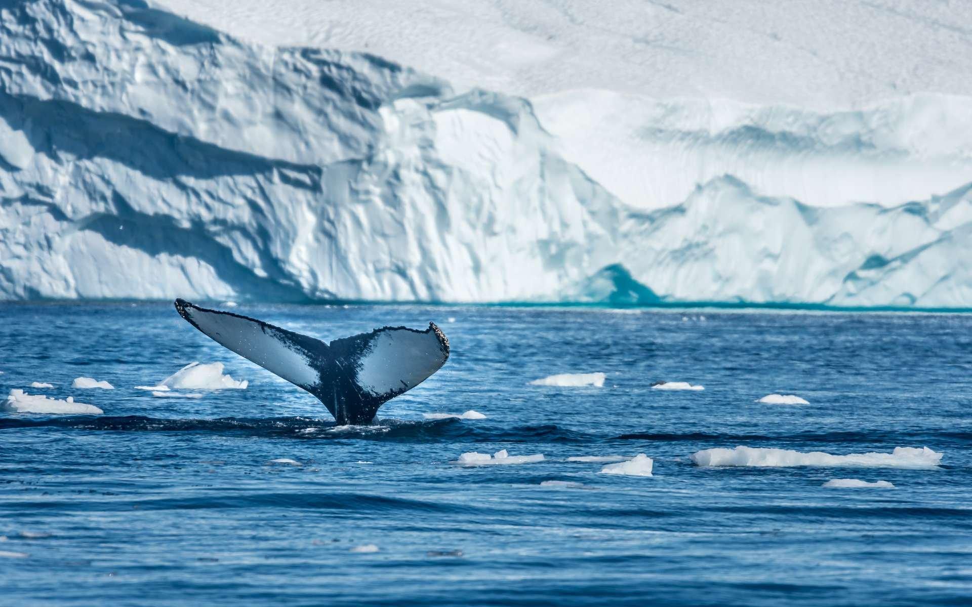 Le Groenland fond à vue d'œil : plusieurs milliards de tonnes de glace disparaissent chaque jour