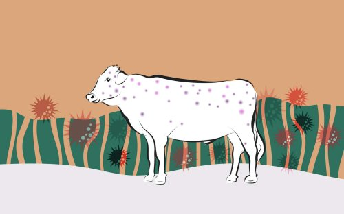 Comment le système immunitaire s'est adapté à la proximité des animaux d'élevage