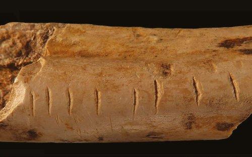 Un système de comptage pour Néandertal gravé sur un os ?