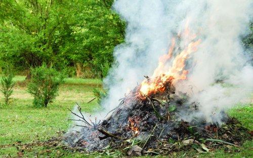 Pourquoi il ne faut pas brûler ses déchets de jardin ?