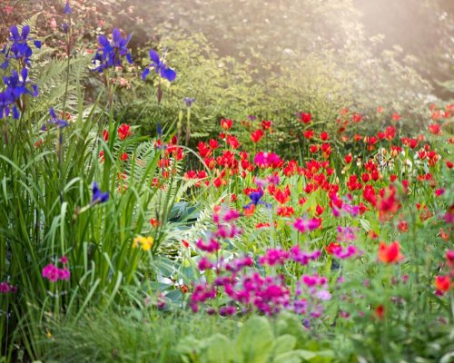 These are the 3 top gardening mistakes, according to expert gardener Luke Marion