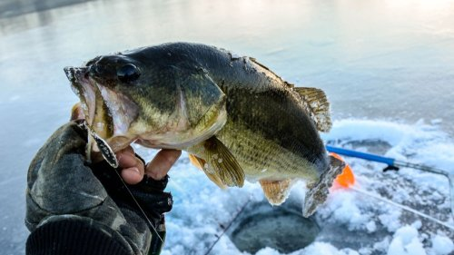 Live bait vs artificial lures for big bass: which is best for ice fishing