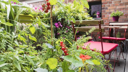 Companion planting: a guide to growing crops side by side to keep them healthy