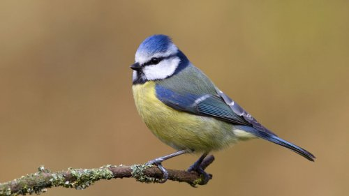 How you can help scientists make gardens wildlife-friendly
