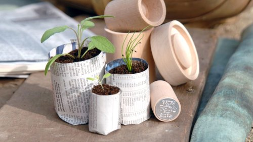 5 simple ways to save money in your garden