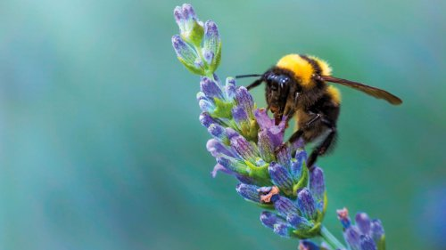 Help our favourite pollinators thrive with these garden tips