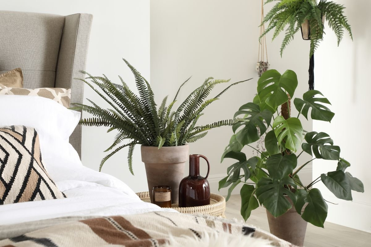 10 best bedroom plants for better air quality and a beautiful sleeping space