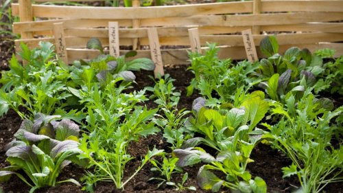 Modern vegetable garden ideas and tips on what to grow and when
