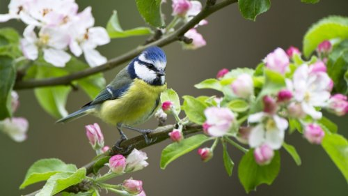 How to attract birds into your garden