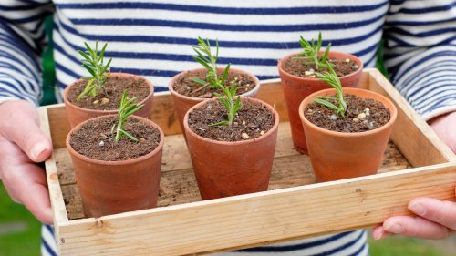 How to take cuttings from plants: follow our expert advice