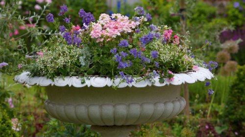 Thriller, spiller, filler – the gardening experts' secret for creating show-stopping containers