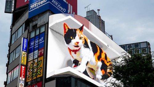 Astonishing 3D cat billboard stuns pedestrians (and the internet)