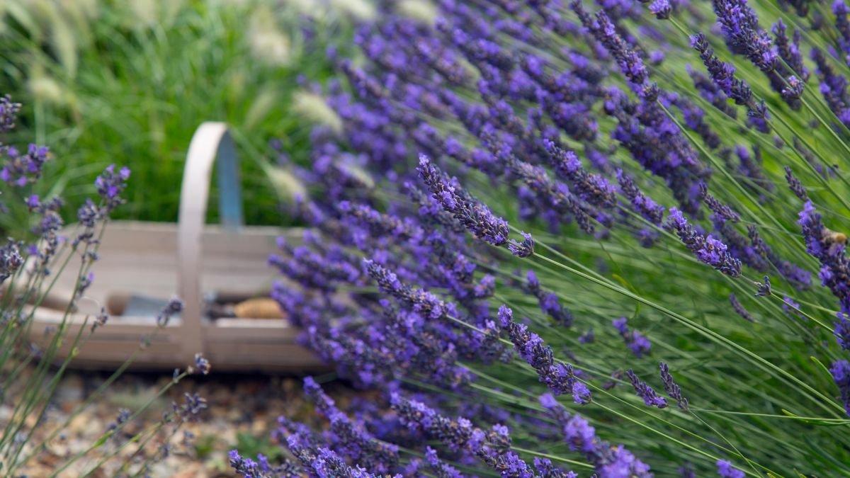 10 fuss-free shrubs for small gardens