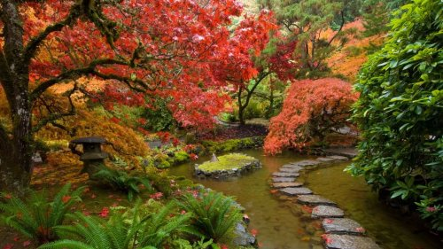 How to grow acers: follow our tips and add year-round interest to your garden