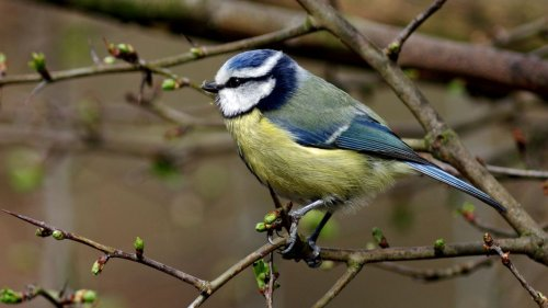 5 easy ways to look after birds in your garden this spring