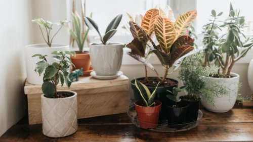Expert reveals a simple repotting mistake we often make with our houseplants