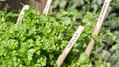 5 most common herb garden mistakes – how to avoid them according to a gardening expert