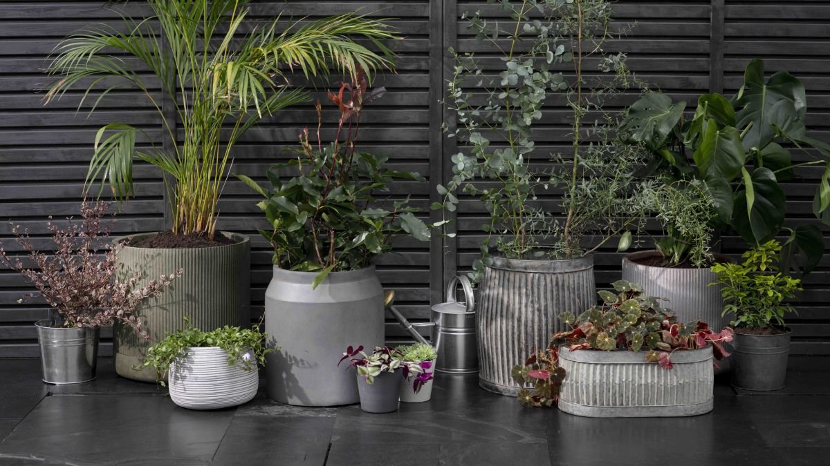 Container gardening mistakes to avoid, according to garden experts
