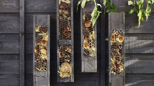How to make a bug hotel: it's easy to achieve in four easy steps
