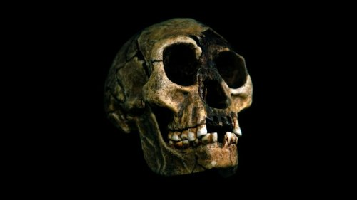 Identity of mysterious 'Hobbits' possibly found