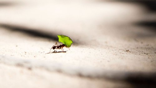 How to get rid of ants – it's time to say goodbye to these pesky insects