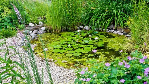 Wildlife ponds: a complete guide on how to build this nature-friendly feature in your plot