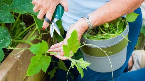 5 ways to prepare your garden for winter