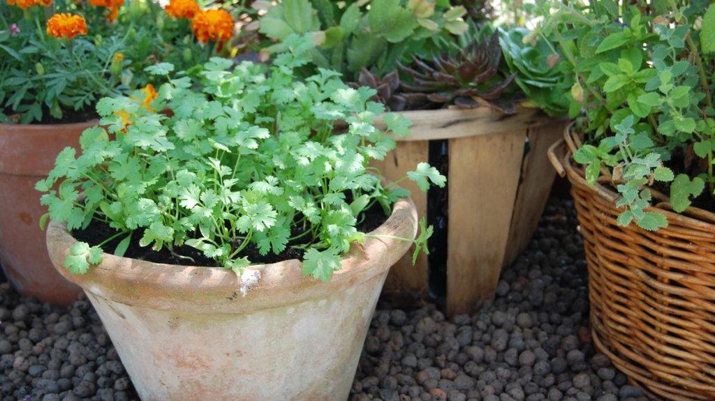 Garden Ideas and Help - cover