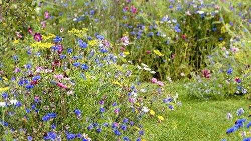 How to rewild your garden in 10 easy steps