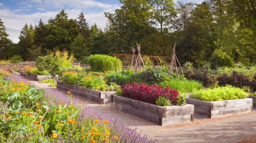 Raised garden bed ideas: 11 stylish and practical ways to grow flowers and veg