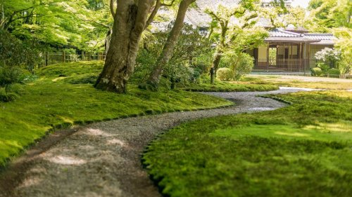 The moss garden is the easy, eco-friendly alternative to having grass – and it's maintenance-free