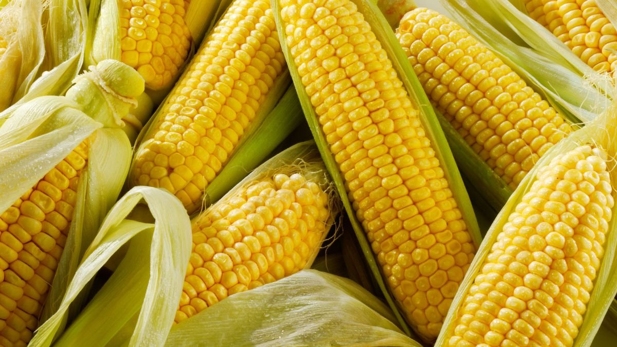 How to grow sweet corn – a guide to planting corn on the cob