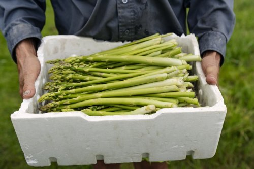 How and when to grow your own asparagus